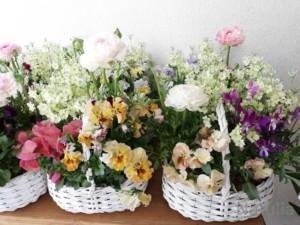 フワッと花かごとアフタヌーンティー