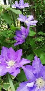6月の我が家と可愛いお花たち