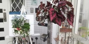 涼やかな窓枠と初夏のインテリア